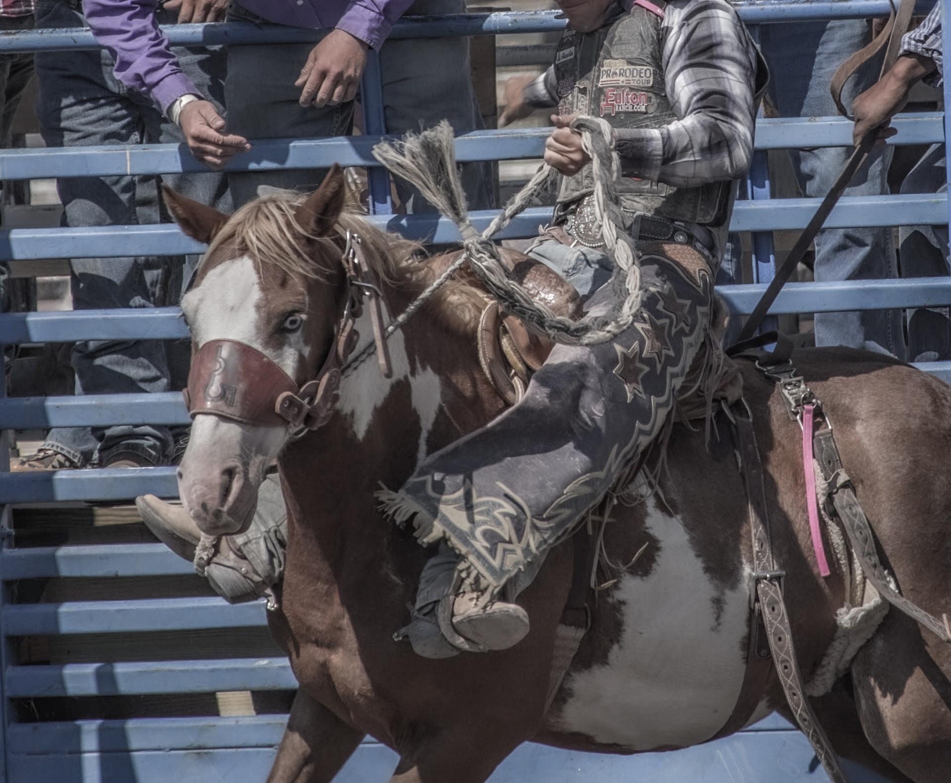 Rodeo - Süddakota