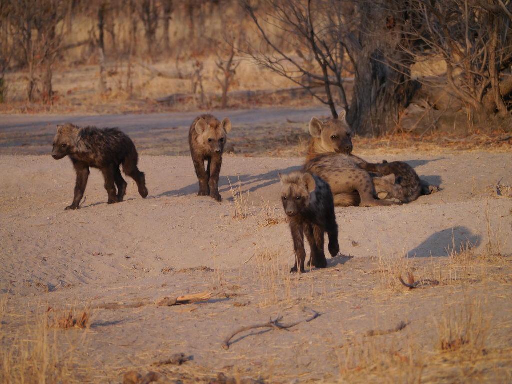 Hyänenfamilie