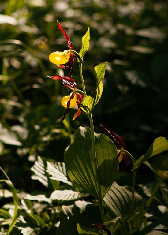 Im Orchideenwald